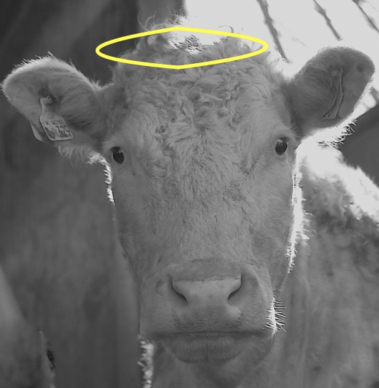 Holy Cow Yoga Retreat Festival, 12 & 13 september 2020